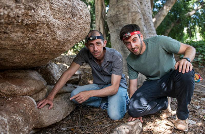 Ces champignons invisibles qui aident la forêt