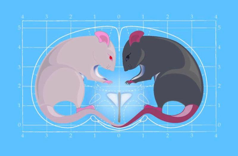 Quels sont les effets de «l'hormone de l'Amour»?
