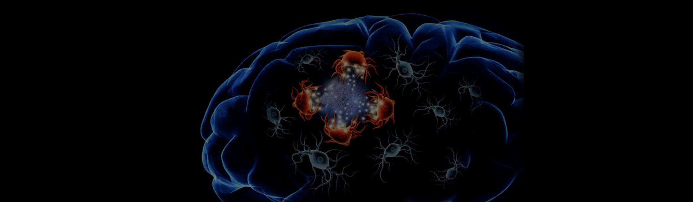 Jeux de DAM : des cellules qui rajeunissent le cerveau